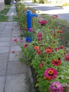 Village Street - Pump and Zinnias