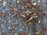 ON THE GROUND 20 - offerings on concrete (2021)